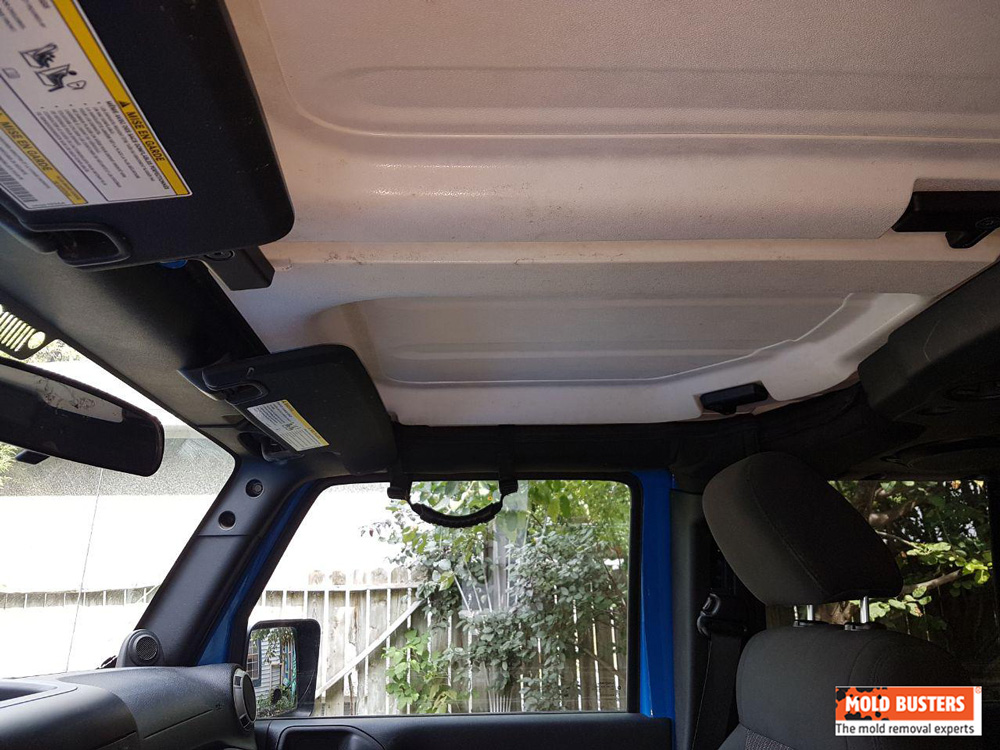 Car Mold - How to Remove Mold in Car | Mold Busters