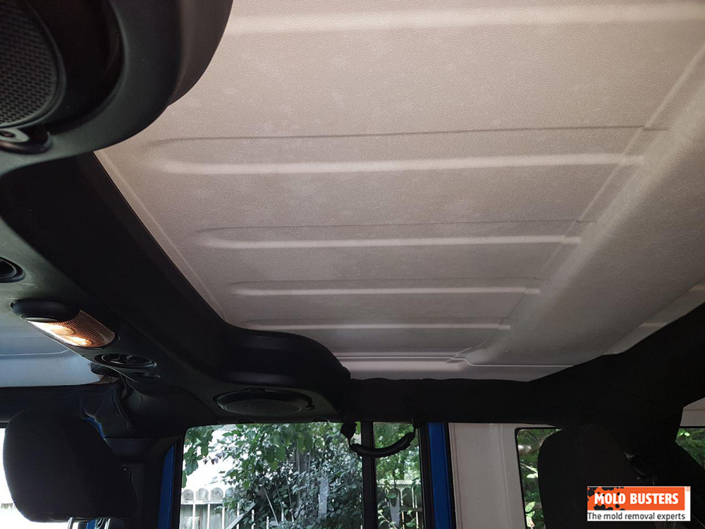 Car Mold - How to Remove Mold in Car   Mold Busters