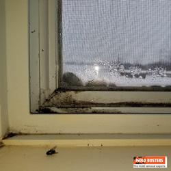 black mold on windows