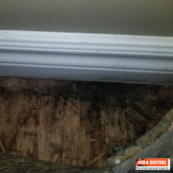 What Is Black Mold Pictures Amp Symptoms Of Black Mold