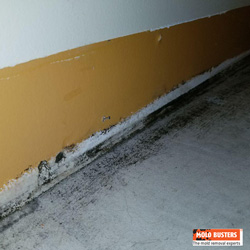 black mould in house