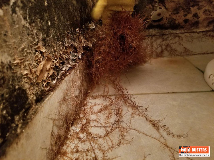 black mold and mycelium growth in bathroom