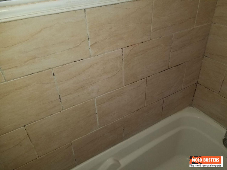 mold on bathroom tiles