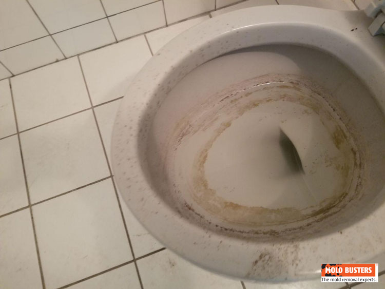 mold on toilets