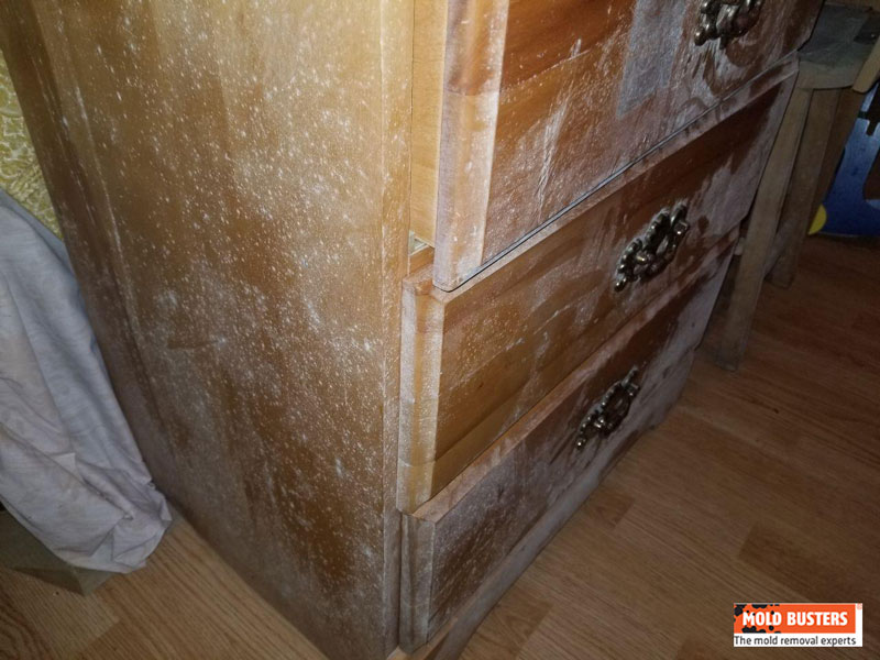 Phenomenal White Mold Is It Dangerous How To Get Rid Of It Mold Ocoug Best Dining Table And Chair Ideas Images Ocougorg
