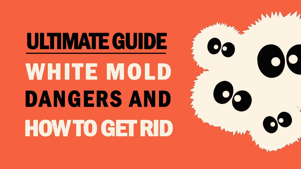 White Mold - Is it Dangerous & How to Get Rid of It | Mold