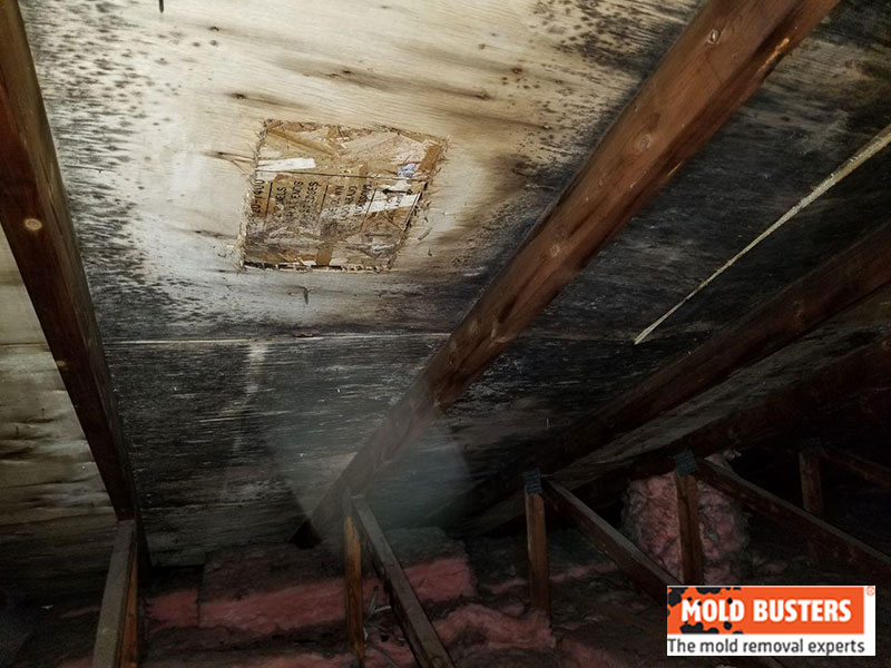 Attic Mold How To Remove Mold In Attic Mold Busters