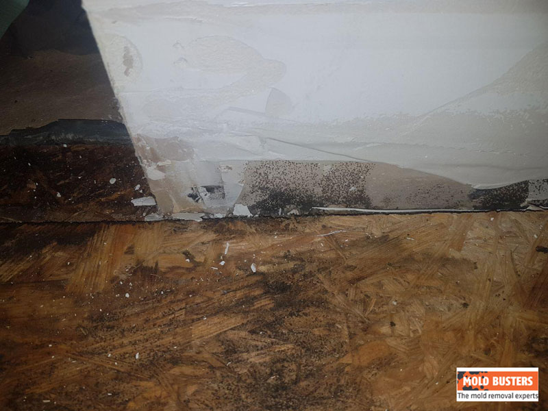 black mold on wooden floor