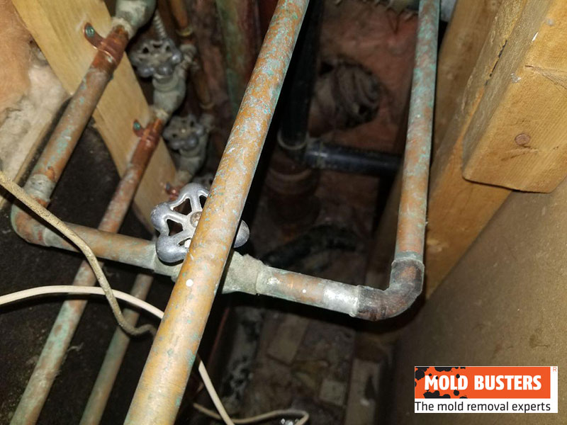 green mold on water pipes
