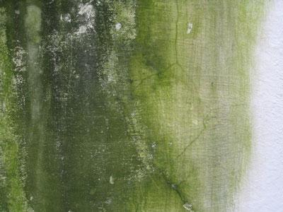De la moisissure verte sur un mir