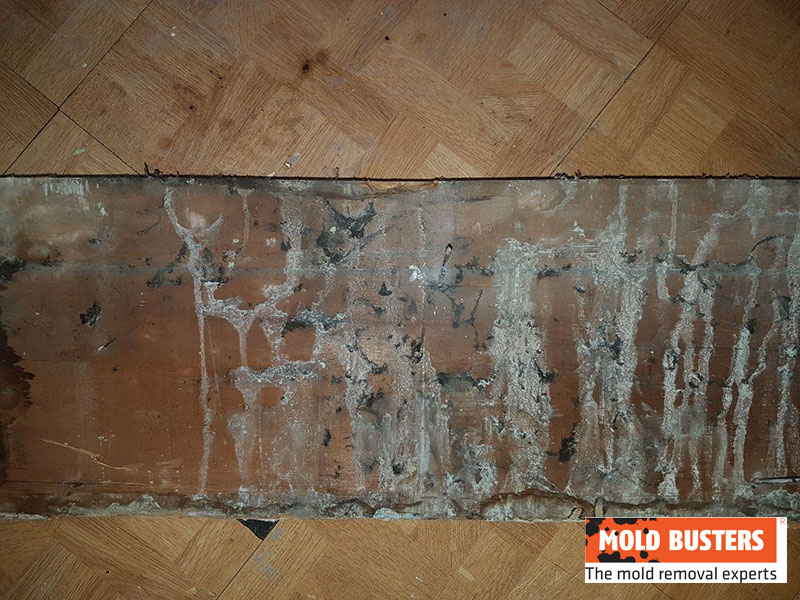 green mold on wood