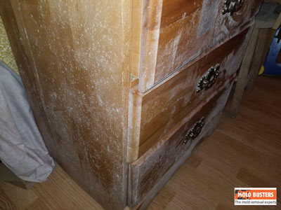 Mold On Wood Mold Removal Services In Ottawa Amp Montreal