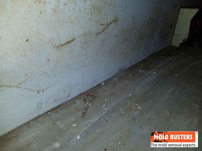 orange mold on walls