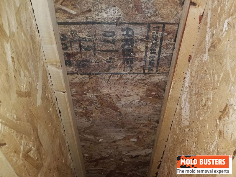 small attic space with mold