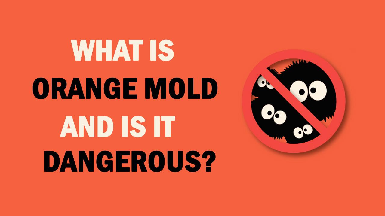 what is orange mold