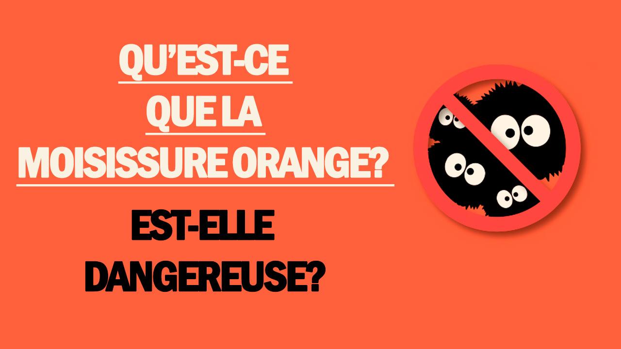 Qu'est-ce que la moisissure orange?