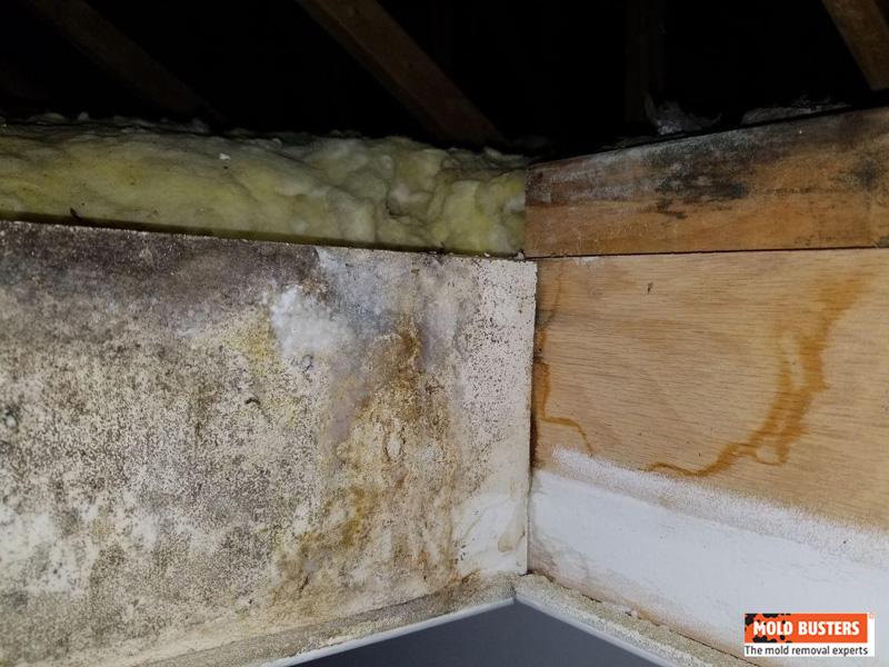 hidden mold spores