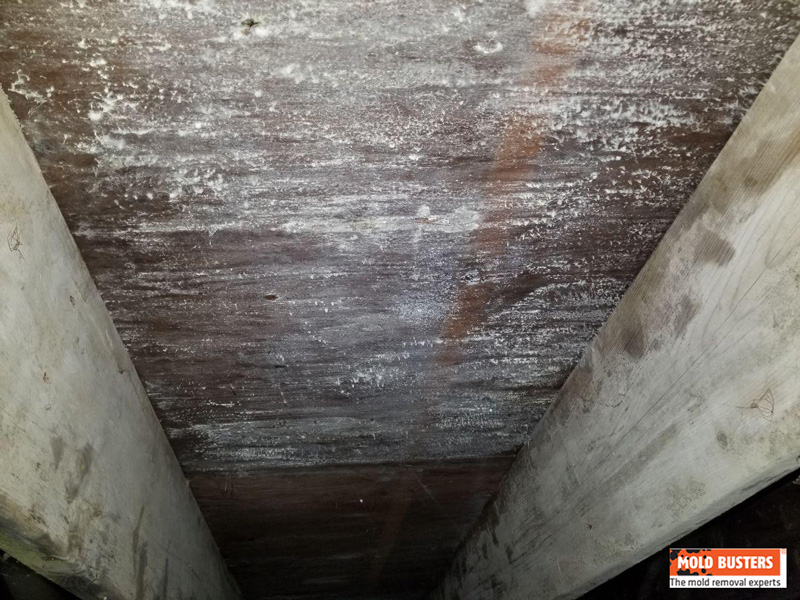 mold in crawl space
