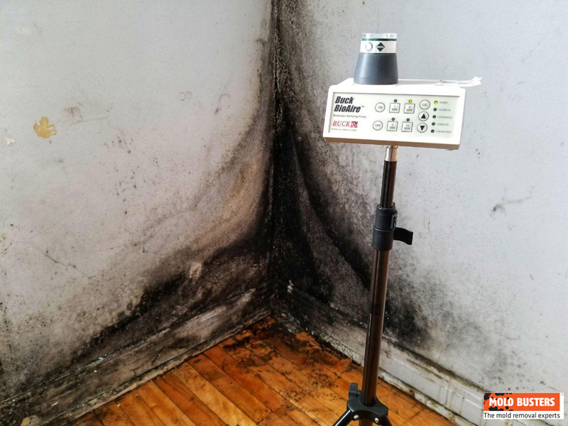 Black Mold Air Quality Test