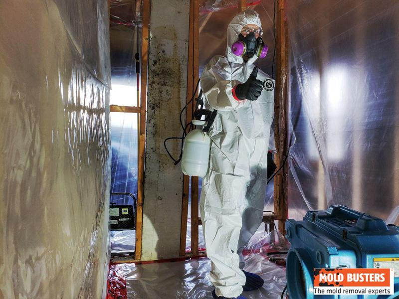 Mold Busters l expert de reference en matiere de detection de l amiante