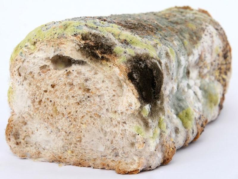 can mold food make you sick