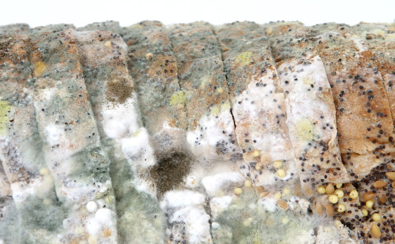 green mold on food bread