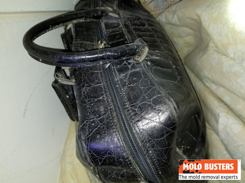 mold on bag