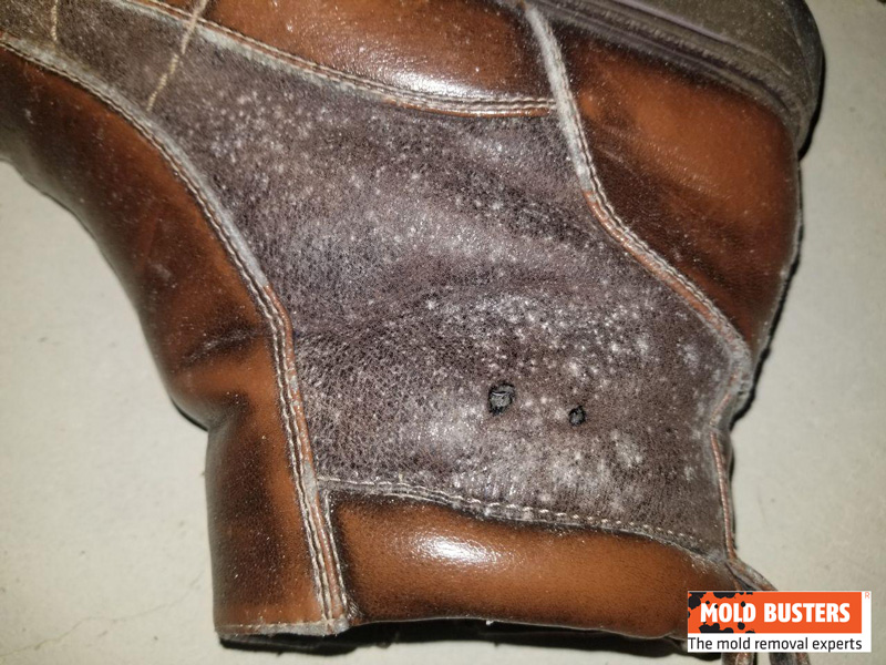 white mold on shoe