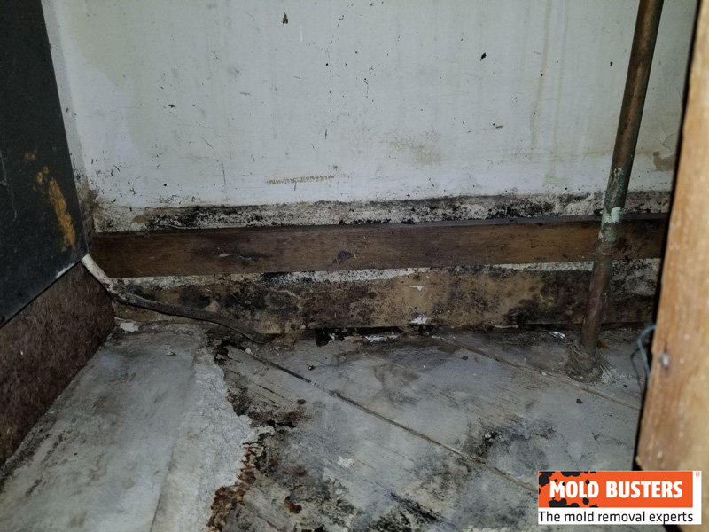 black mold on kitchen walls