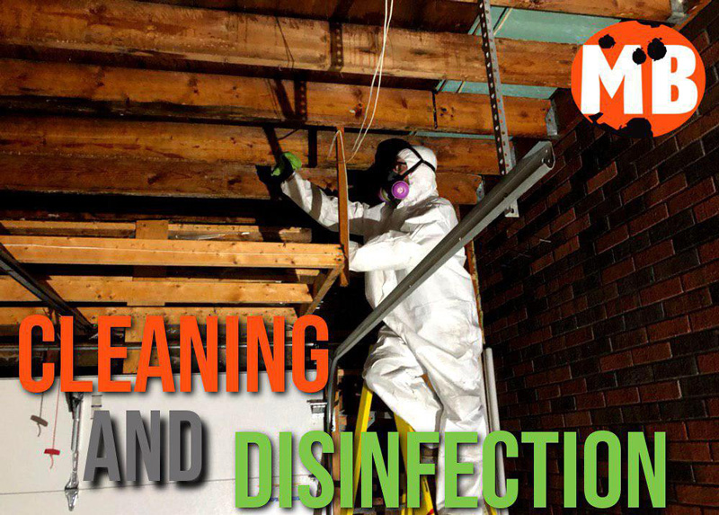cleaning and disinfection after mold removal