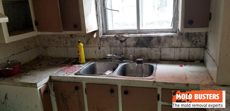 kitchen mold