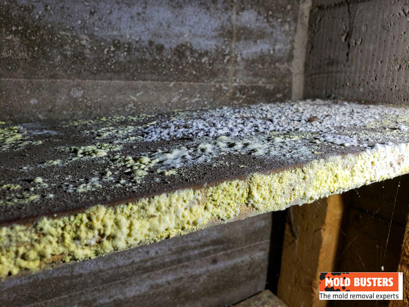 mold in cold storage room 02