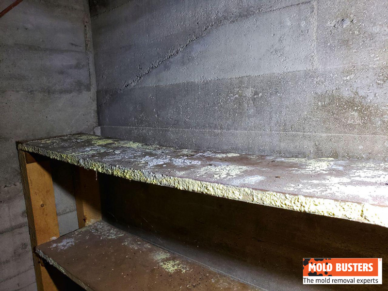 mold in cold storage room 03