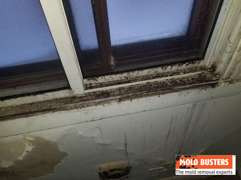 mold on kitchen windows