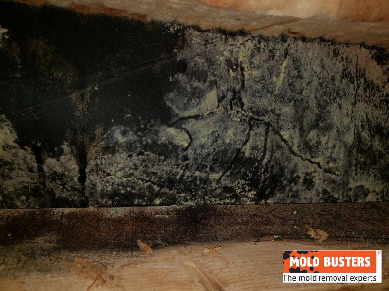 yellow mold on wood walls