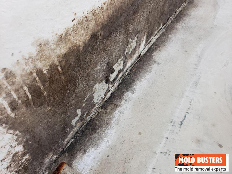 brown mold on wall