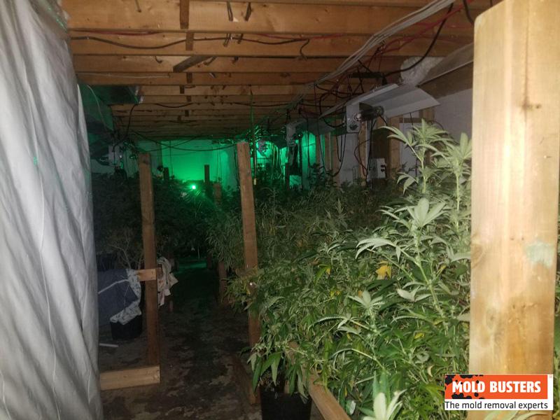 marijuana grow op