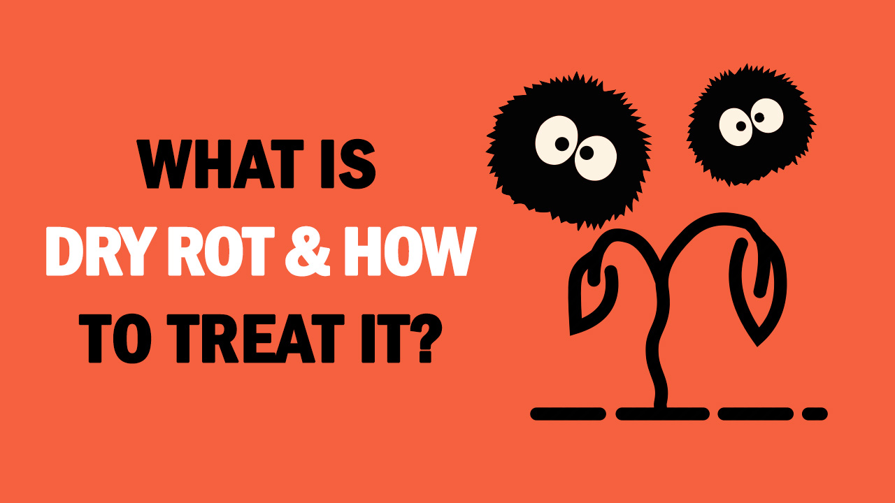 what is dry rot and how to treat