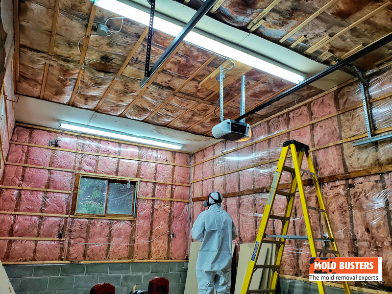 Mold Remediation Technician Assessing The Scene